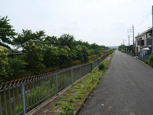 20200706_dai2_oobagawa_02