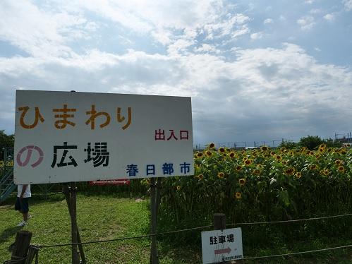 20200808_himawari_05