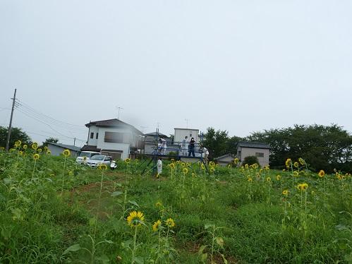 20200824_himawari_06