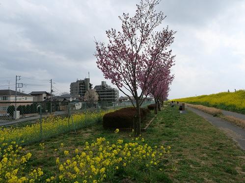 20210325_youkou_05