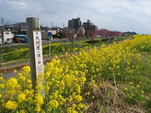 20210325_youkou_09