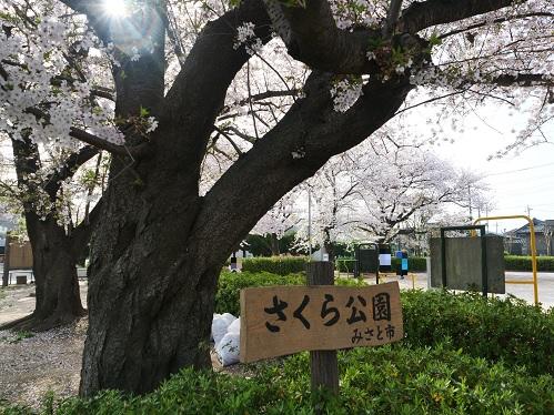 20210414_sakura_01