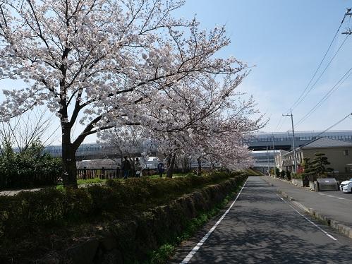 20210422_sakura_01