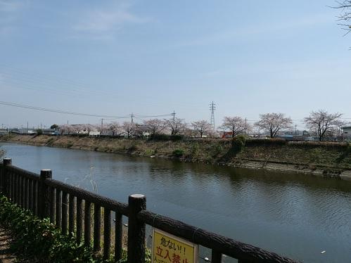 20210422_sakura_07