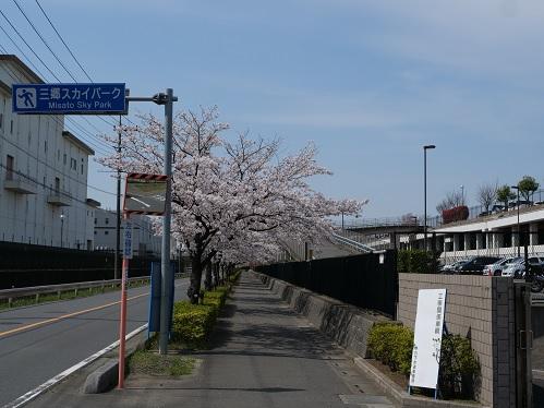 20210507_sakura_01
