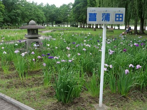20210616_syoubu