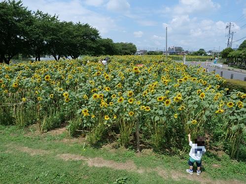 20210802_himawari_02